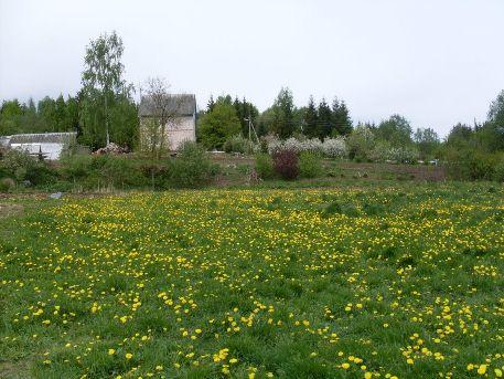 Усадьба Лесная поляна